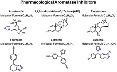 Frontiers | Cognitive Effects of Aromatase and Possible Role