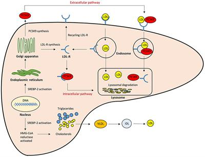Frontiers | Non-antibody Approaches to Proprotein Convertase