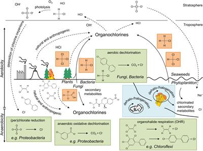 Frontiers | Microbial Synthesis and Transformation of Inorganic and