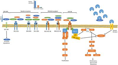 Frontiers | Systemic Metabolism, Its Regulators, and Cancer