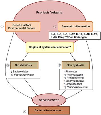 Frontiers | Bacterial Dysbiosis and Translocation in