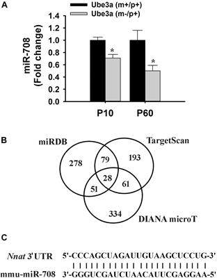 Frontiers | Down-Regulation of miRNA-708 Promotes Aberrant