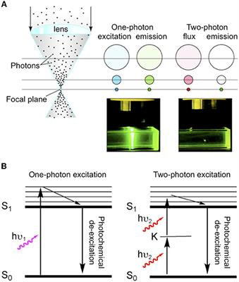 Frontiers | Two-Photon Uncaging of Glutamate | Frontiers in