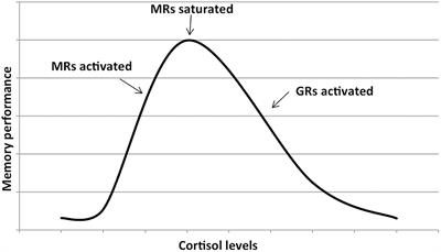 Frontiers   High Cortisol and the Risk of Dementia and
