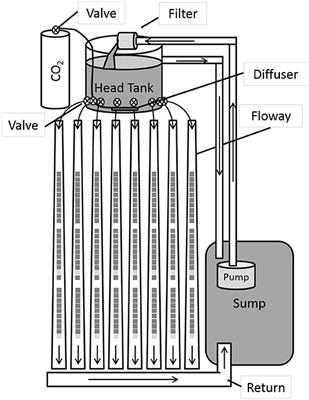 Frontiers | Co-digestion of Wastewater-Grown Filamentous Algae With