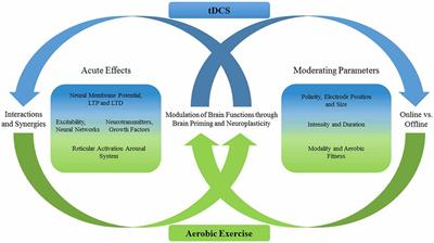 Frontiers | A Review of Acute Aerobic Exercise and Transcranial