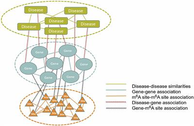 Frontiers | DRUM: Inference of Disease-Associated m6A RNA