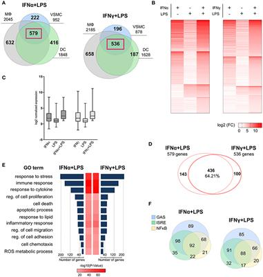 Frontiers | Signal Integration of IFN-I and IFN-II With TLR4