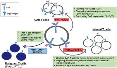 Frontiers | Chimeric Antigen Receptors for T-Cell Malignancies