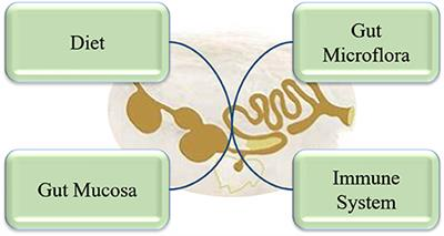 Frontiers | Dietary Fiber and Intestinal Health of