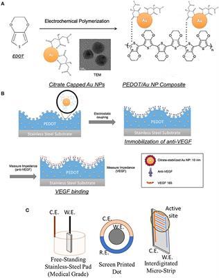 Frontiers   Impedimetric Biosensors for Detecting Vascular