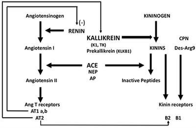 Frontiers in Medicine   Hematology