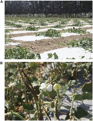 Frontiers in Plant Science   Plant Breeding