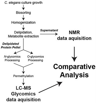 Frontiers in Molecular Biosciences | Metabolomics
