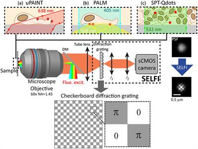 Self Interference SELFI Microscopy For Live Super Resolution Imaging And Single Particle Tracking In 3D