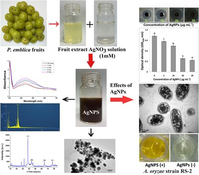 Frontiers | Biogenic Synthesis of Silver Nanoparticles Using