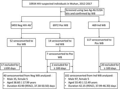 Frontiers | Estimation of the Seroconversion Duration of HIV-1