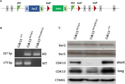 Cellular Biochemistry