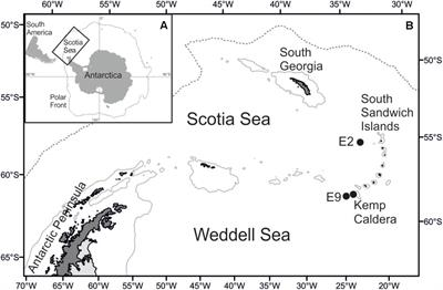 Frontiers | A New Vent Limpet in the Genus Lepetodrilus (Gastropoda