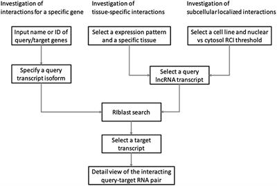 Frontiers | LncRRIsearch: A Web Server for lncRNA-RNA