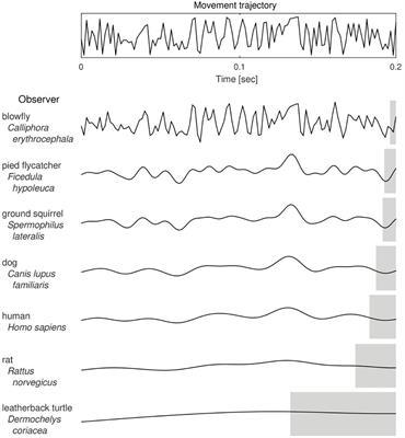 Social And Evolutionary Neuroscience