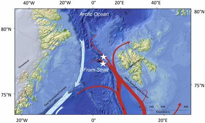 Frontiers | Pelagic Amphipods in the Eastern Fram Strait With