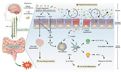 Frontiers in Microbiology | Fungi and Their Interactions
