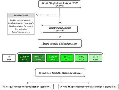 Frontiers | Duration of Humoral and Cellular Immunity 8