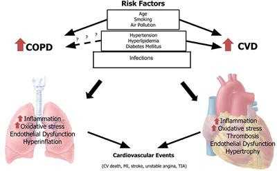 Frontiers in Cardiovascular Medicine   Cardiovascular Epidemiology