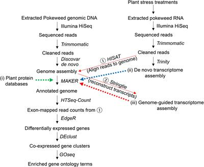 Frontiers in Plant Science | Bioinformatics and