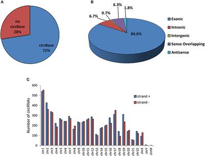 Frontiers | Expression Patterns of Circular RNAs in High
