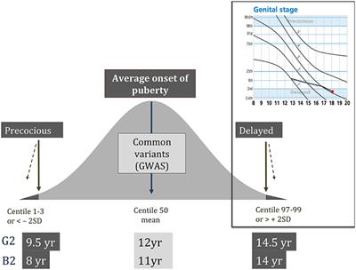Frontiers | The Genetic Basis of Delayed Puberty | Endocrinology