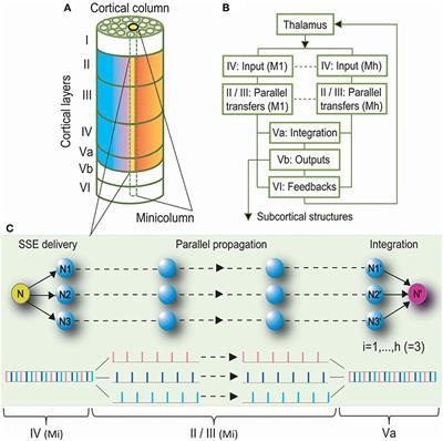 Frontiers in Computational Neuroscience