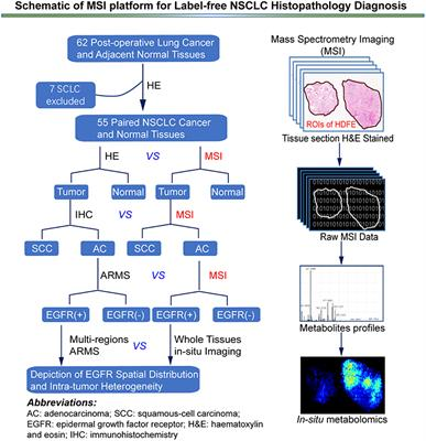 Frontiers in Oncology | Cancer Imaging and Image-directed