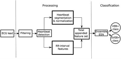 Frontiers | A Fast Machine Learning Model for ECG-Based