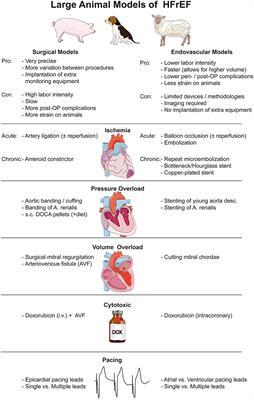 Frontiers in Cardiovascular Medicine