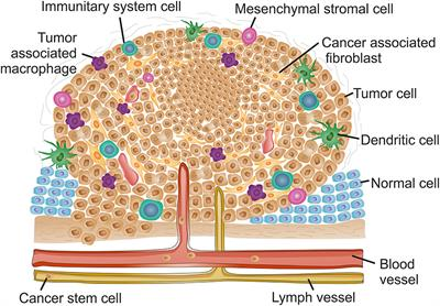 Frontiers | Nanotheranostics Targeting the Tumor