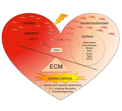 Frontiers in Physiology | Cardiac Electrophysiology