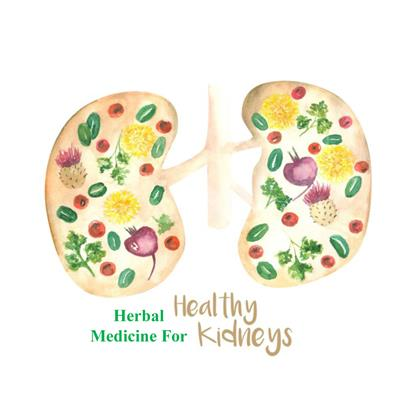 Applications Of Herbal Medicine To Control Chronic Kidney Disease Frontiers Research Topic