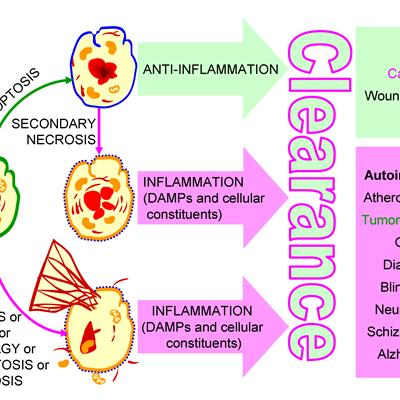 Chronic inflammation in conditions associated with a