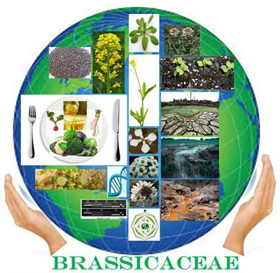 The Brassicaceae — Agri-Horticultural and Environmental