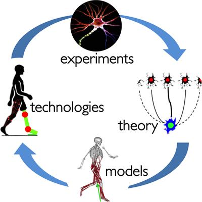 A flow diagram showing the connection of experiments, theory, models, and technology in the study of neuromechanics