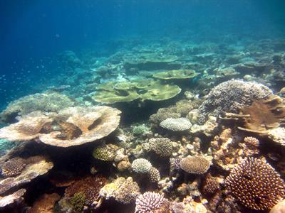How to Become a Marine Biologist   http   www academicinvest