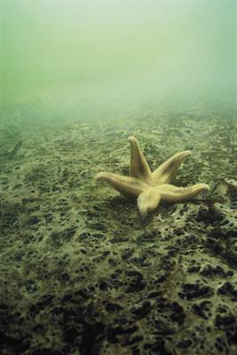 Eutrophication in Coastal Marine Ecosystems
