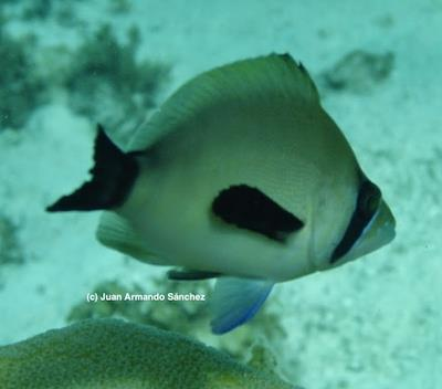 SeaFlower Biosphere Reserve New Findings And Trends In The Largest Caribbean Marine Protected Area