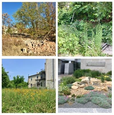 Frontiers in Ecology and Evolution | Urban Ecology